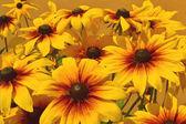 oranžové květy pozadí