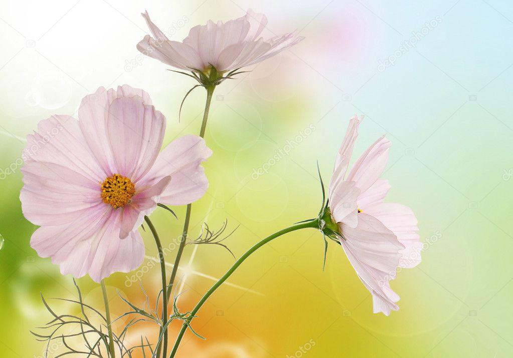 Illustrazione sfondi desktop fiori primavera primavera for Immagini sfondo desktop primavera