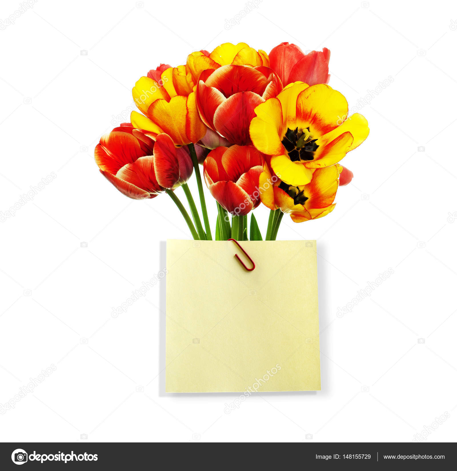A beautiful bouquet of fresh garden tulips with a congratulatory a beautiful bouquet of fresh garden tulips with a congratulatory note with space for your text photo by alex150770 altavistaventures Choice Image