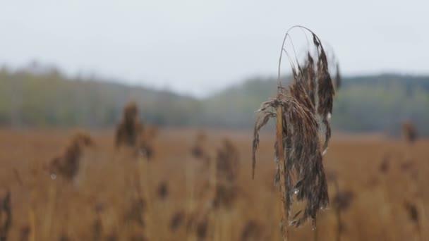 Oblasti suché trávy a lesa