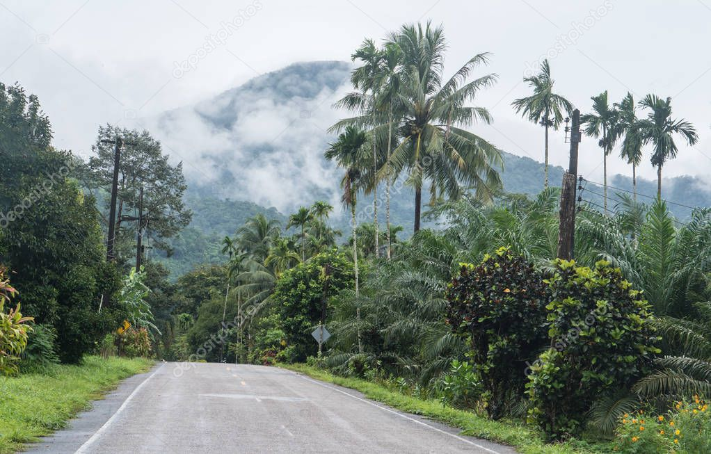 Empty road in jungle