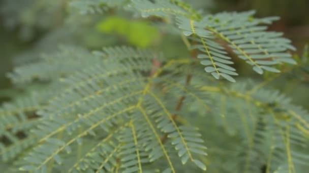 Green fern in tropical climate