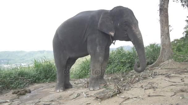 Elefánt a hegyen Phuket-ben