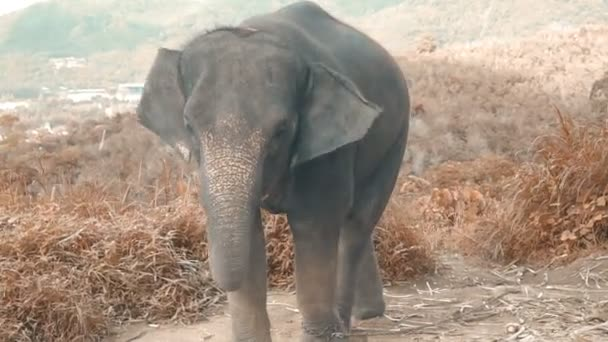 Elephant baby on the hill in Phuket