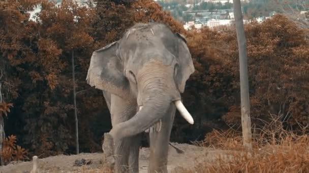 Slon na kopci v Phuketu
