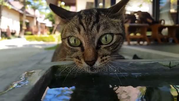 Vértes gyönyörű macska ivóvíz a pot szabadban