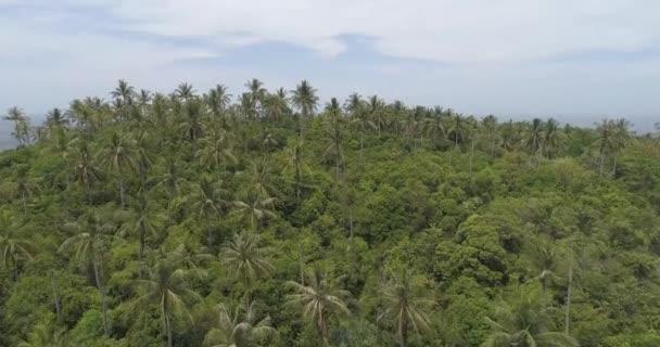 Letecký pohled na palmy, moře a obloha / letecké dron pohled tropické krajiny, s palmami, mořem a oblohou
