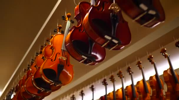 Violins display in music shop / Bottom view of musical instrument display  with violins hanging from the ceiling