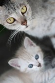 Photo Beautiful gray mom cat with adorable kitten outdoors