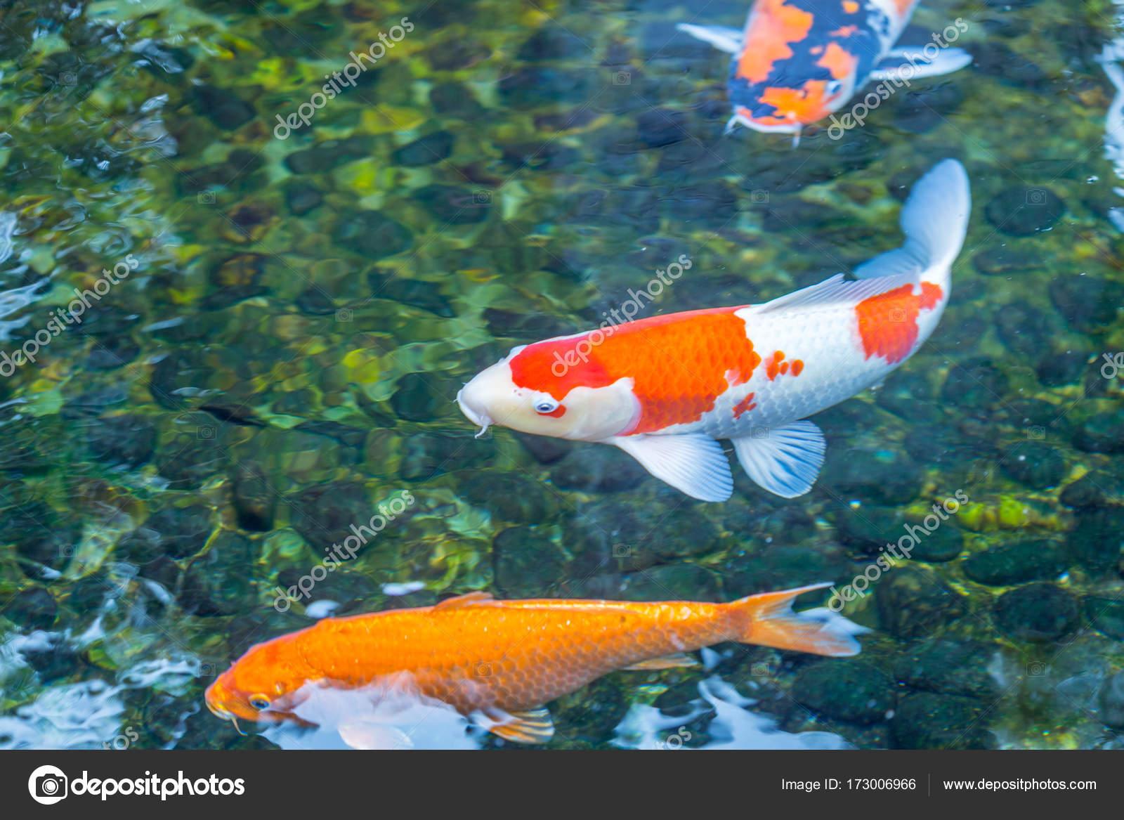Underwater World Color Fish — Stock Photo © Toyechkina #173006966