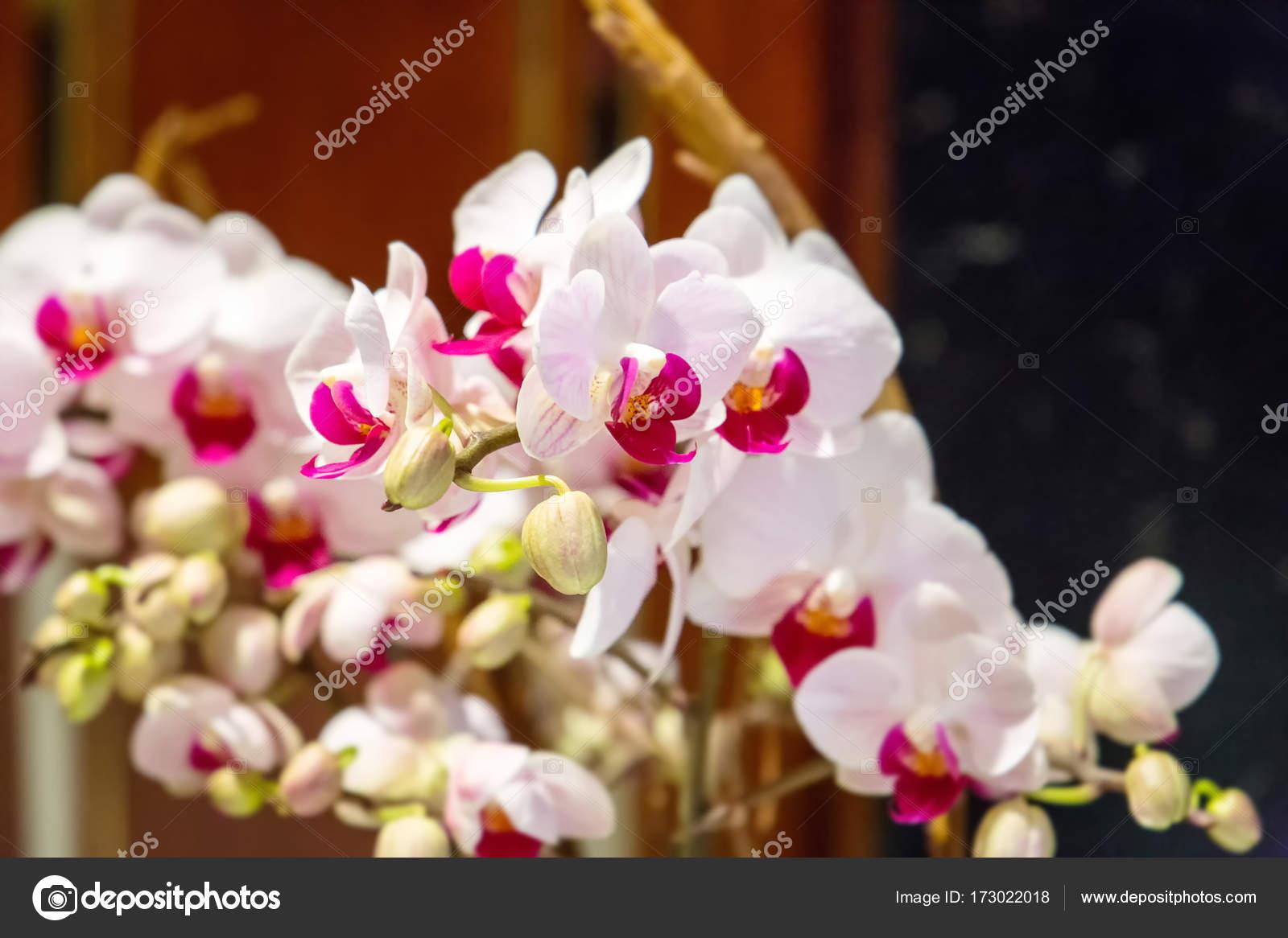 Beautiful White Orchid Flowers Stock Photo Toyechkina 173022018