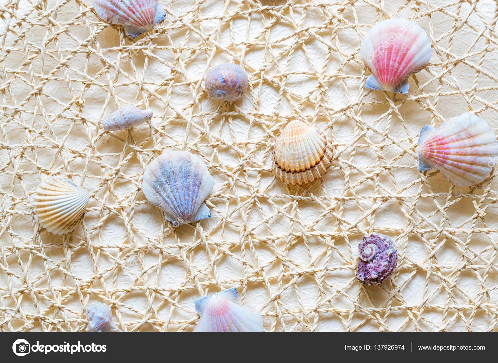 Gaas Het Interieur : Zeeschelpen en tweekleppigen op gaas u stockfoto chasdesign