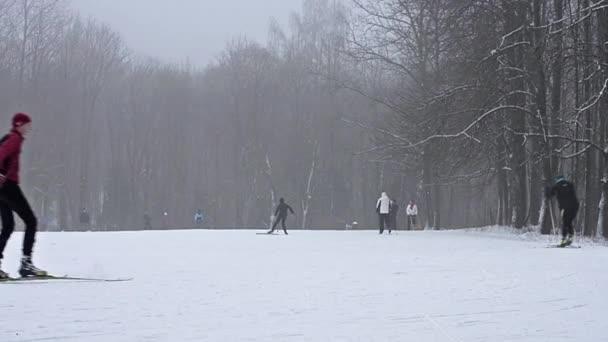 Mladá vybavené lyžaře lyžování na sjezdovce s Lyžařské hůlky pod husté sněžení na zasněžené louce obklopené lesem. Aktivní zimní sport - běžky na čerstvém vzduchu, Krasnoye Selo, Rusko