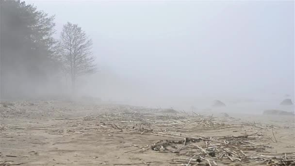 https://st3.depositphotos.com/1012492/15748/v/600/depositphotos_157480234-stock-video-thick-fog-spread-on-sandy.jpg