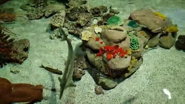Egzotikus tengeri halak úszni egy nagy akvárium
