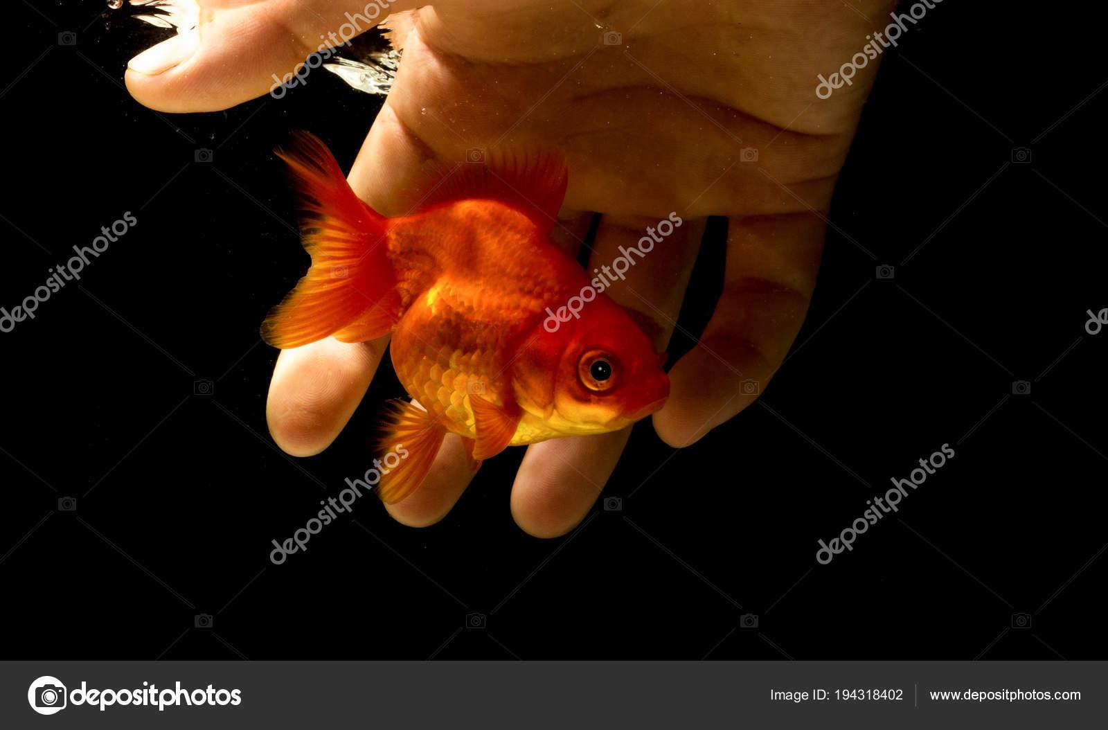 Если женщина поймала во сне живую рыбу, значит найдет обеспеченного мужа, если же ее выловил для нее кто-то другой – к беременности.