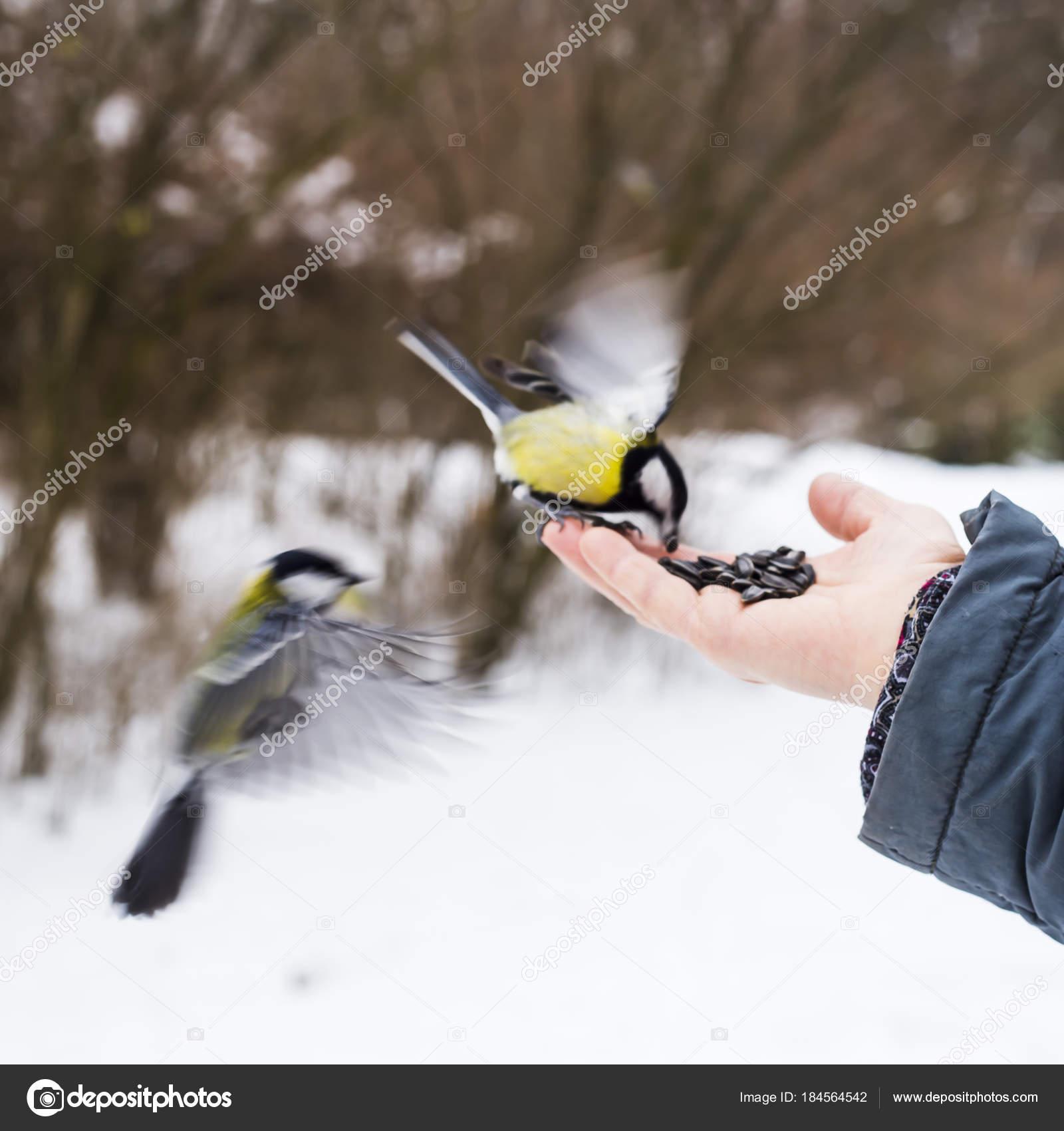 μια εικόνα ενός άντρα πουλί Νικόλ Σέρινταν πορνό