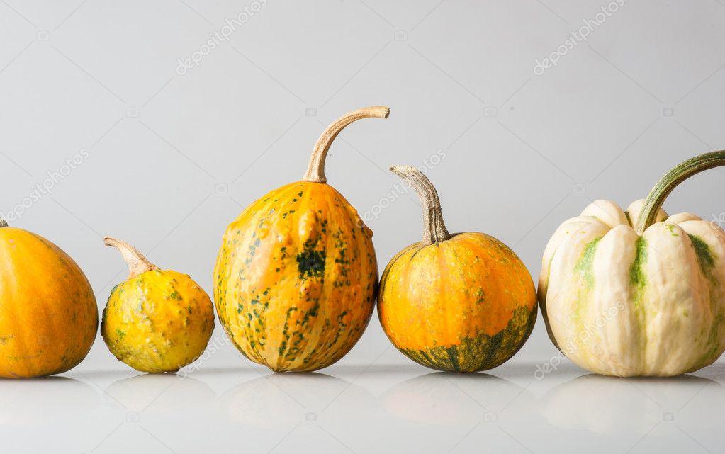Wiersz Z Pięciu Różnych Melony Rosliny Basztanowe