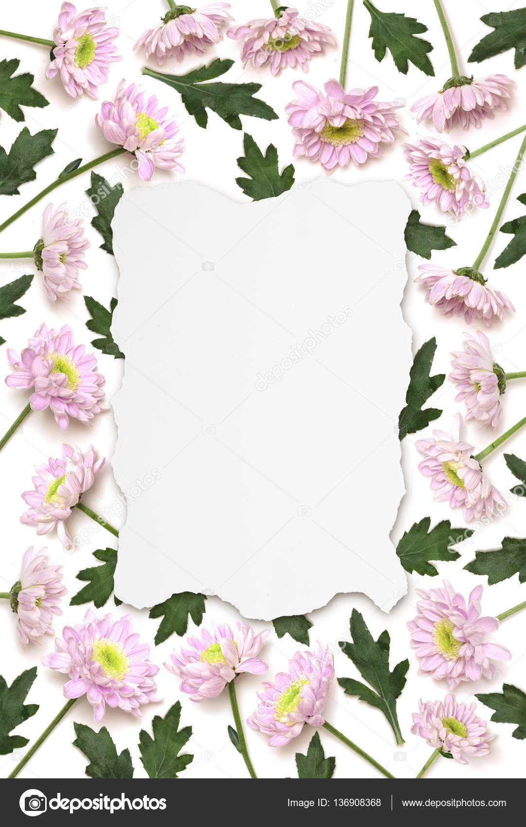 Pink Chrysanthemum Flower Frame Of Ripped White Paper Background
