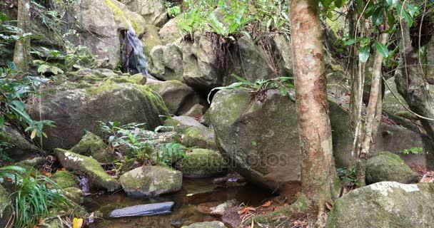 Vodopádu v národním parku Masoala, Madagaskar