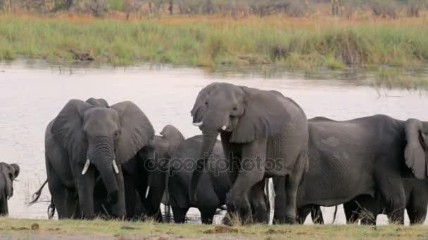 Afrikanische Elefanten Afrika Safari Wildtiere und Wildnis