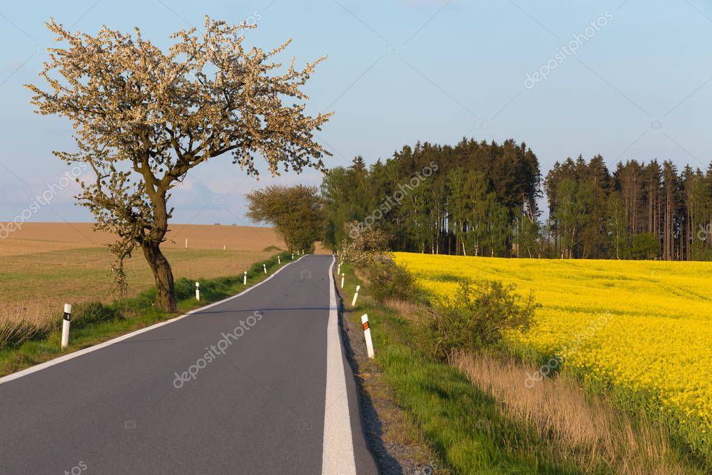 road with trees in spring