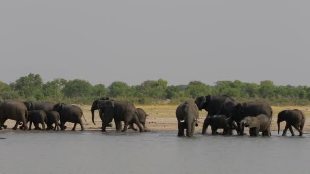 Afrikai elefánt afrikai Szafari kicsapongó élet és természet