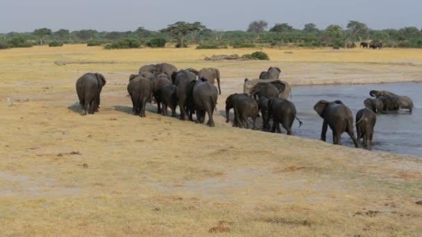 Például, víznyelő Hwange, afrikai Szafari vadon élő elefántok csoport