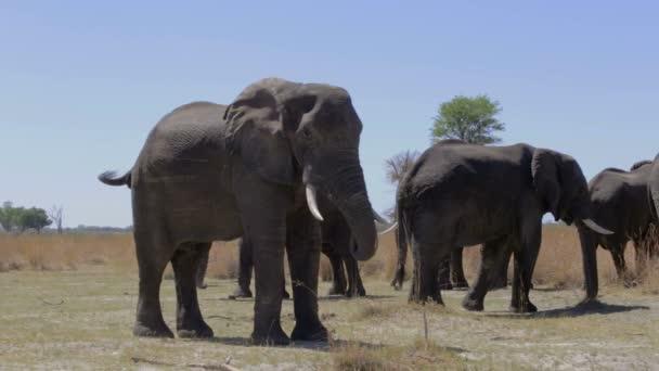 Wildlife safari Afrika slon africký a divočiny