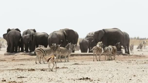 Elefántok, zebrák, springbok és orix például víznyelő. Wildlife afrikai Safari.