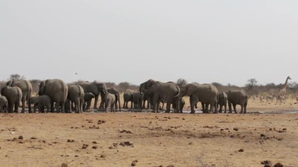 Pití na divoké Afriky Napajedla, Hwange, sloni
