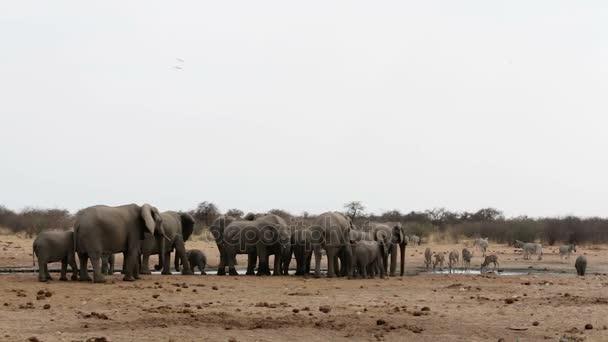Iszik a például, víznyelő Hwange, afrikai vadon élő elefántok