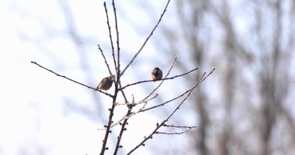 Ptačí vrabec sedí na větvi přírody