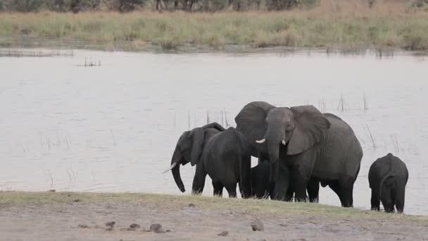 Afrikanischer Elefant, Bwabwata Namibia, Afrikanische Safari Wildtiere