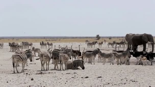 waterhole with Elephants, zebras, springbok and oryx