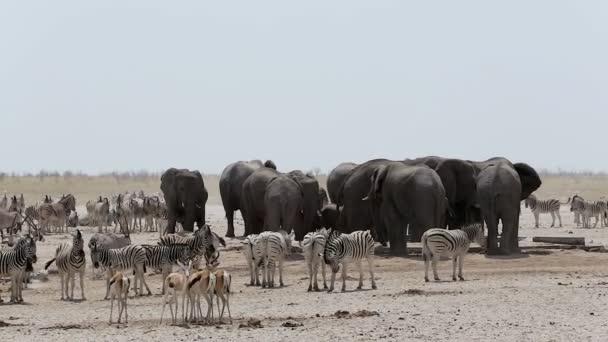vodní díra se slony, zebry, springbok a oryx
