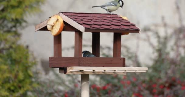 gyönyörű kis madár nagy mell madáretető