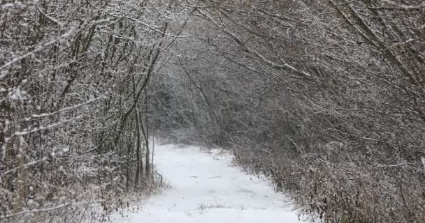 Winter alley landscape covered with snowfall