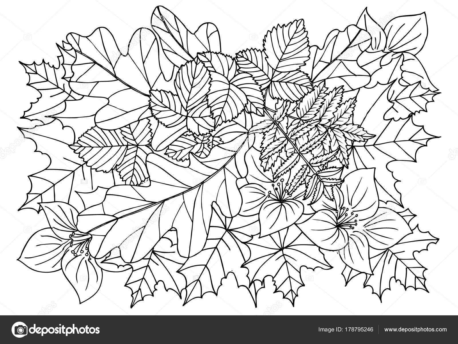 Hojas de otoño en blanco y negro. Doodle de arte para colorear libro ...