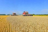 Fotografie Cleaning grain harvesters in the rural landscape.