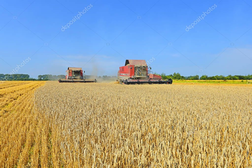 Cleaning grain harvesters in the rural landscape.