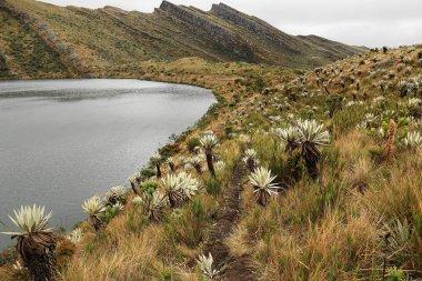 Scenic view of Siecha Lagoon, Chingaza National Park, Colombia