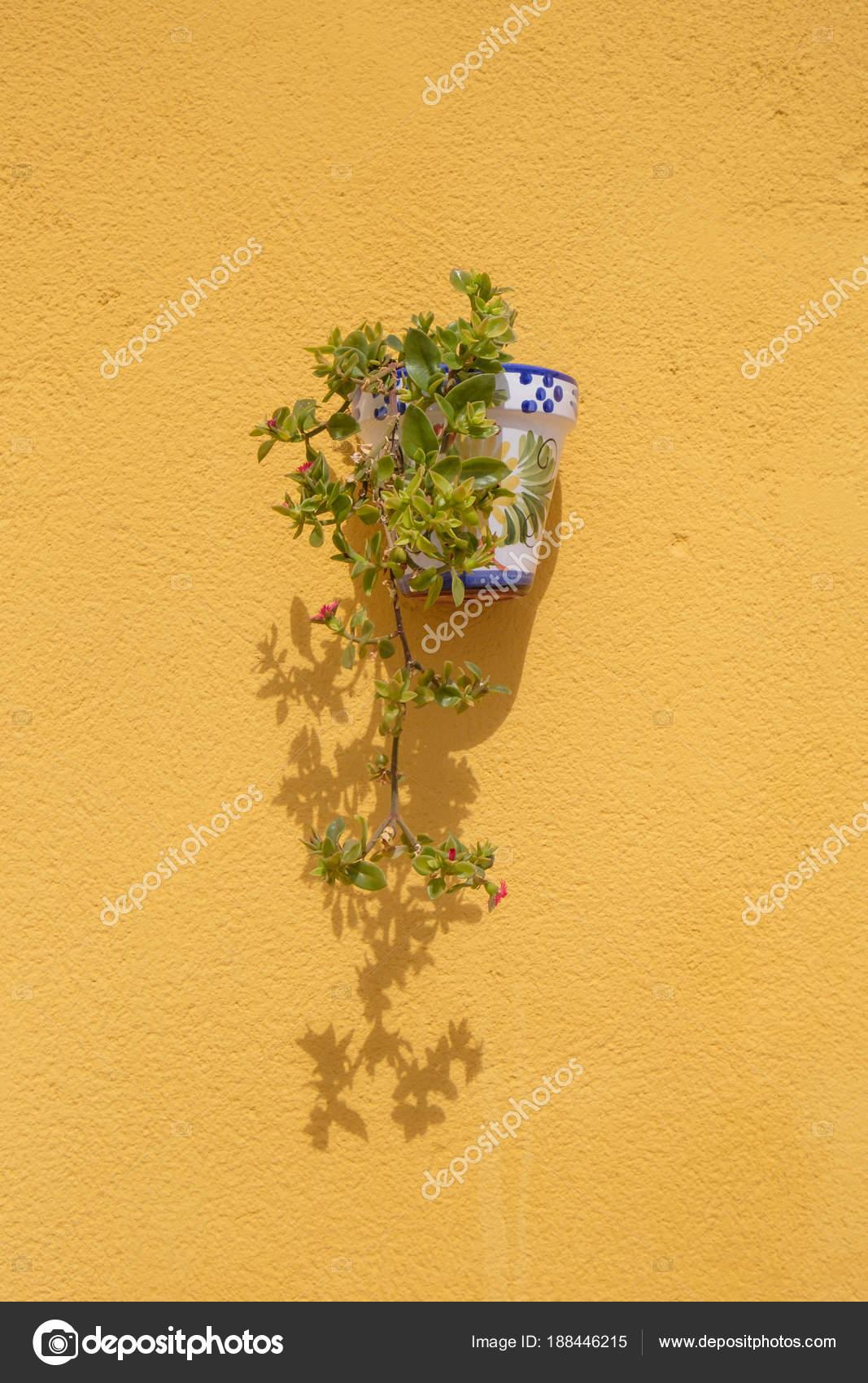 wand montiert blumentopf — stockfoto © lucielang #188446215