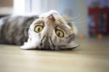 Cat sleeping on the floor stock vector