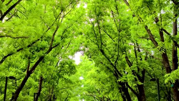 lesní stromy. příroda zelené dřevo pozadí