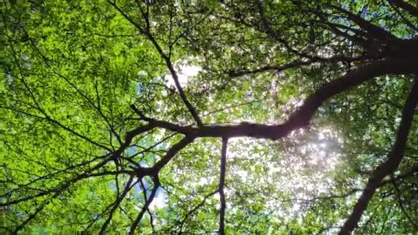 lesní stromy. příroda zelené dřevo a sluneční světlo pozadí
