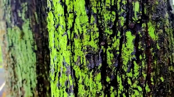 közeli moha a fa törzsén egy zöld erdőben