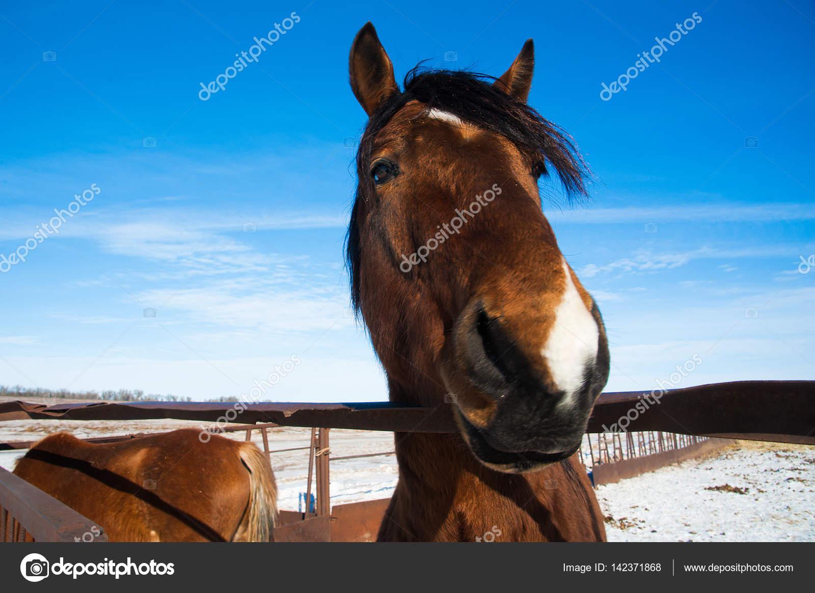 Cavalli nella fattoria in inverno foto stock for Piani di casa di fattoria di cavalli