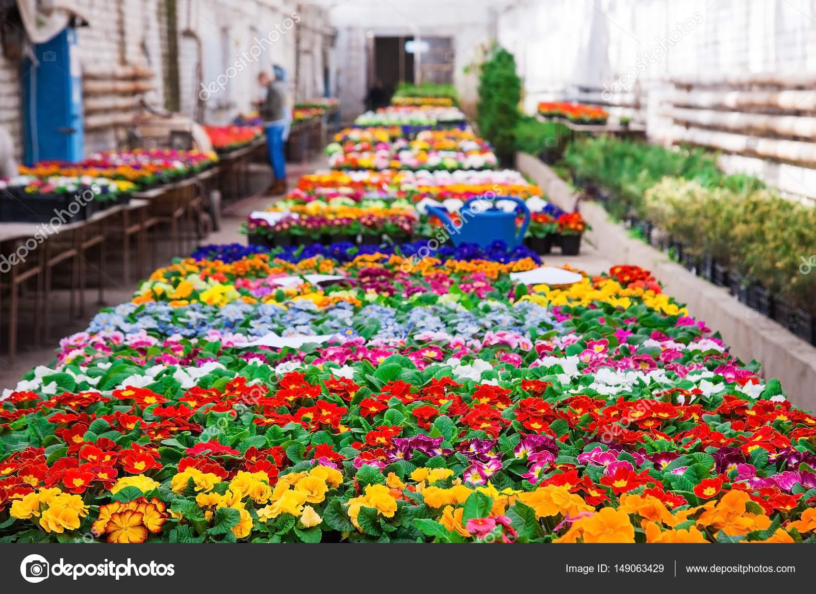 Serre de jardin avec une variété de plantes et fleurs — Photographie ...