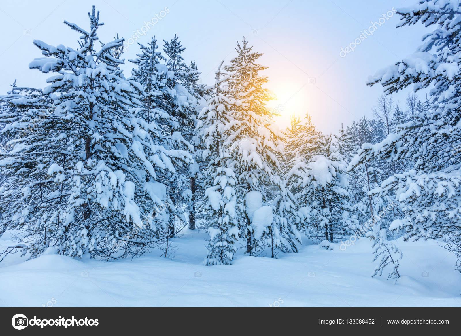 Imágenes: Paisajes Invierno Fondos